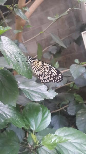 Butterfly 2 World Stellenbosch - PeanutGallery247