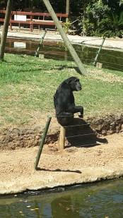 Monkey Town Somerset West - PeanutGallery247