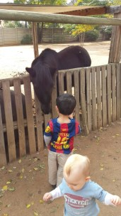 Things to Do, Places to See - with Kids in Joburg Crazy Kids Farm Yard - PeanutGallery247.jpg