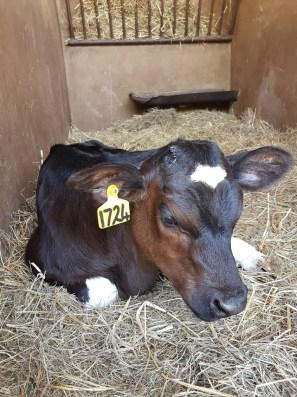 Things to Do, Places to See - with Kids in Joburg Irene Dairy Farm - PeanutGallery247.jpg