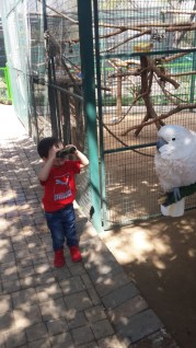 Things to Do, Places to See - with Kids in Joburg Lory Park Zoo - PeanutGallery247