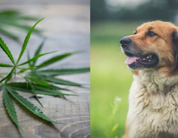 3 Amazing Benefits of CBD for Dogs