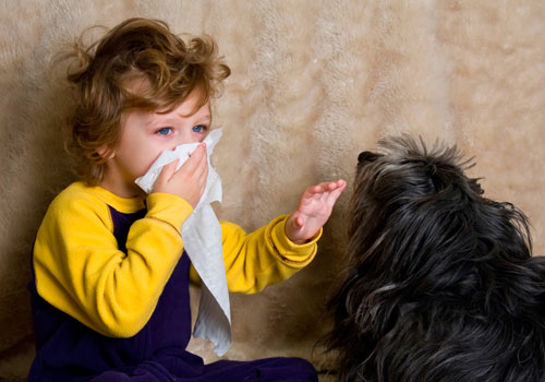 Consider allergy cases while choosing dog breed