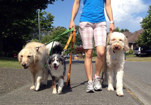 Find a dog sitter near you