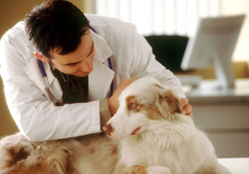 Regular veterinary check ups for dogs