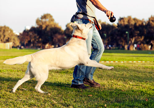 Behavior Therapy or Training for Dog Chases Tail