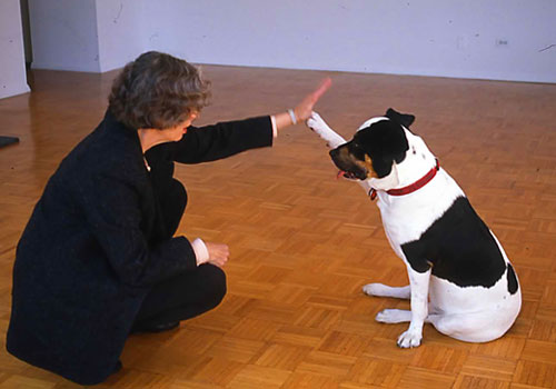 Distract your dog from the fearful behavior