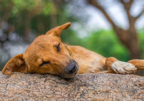 Dogs are sleep lovers