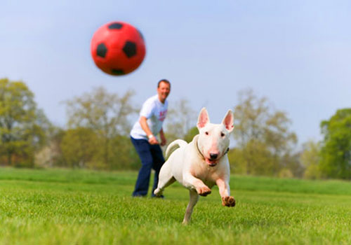 Give your dog vigorous exercise