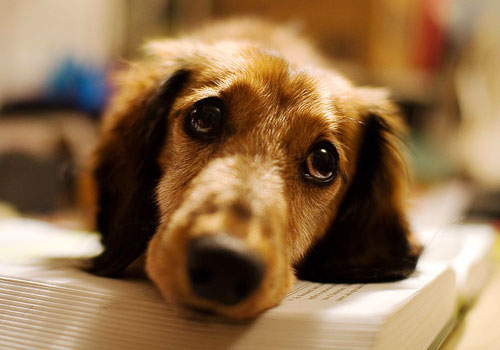 How to Stop Dog Crying?