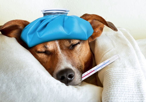 Medical Condition of your dog