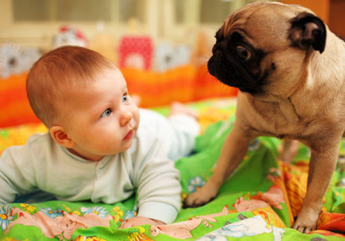 Preparing Dog for Baby