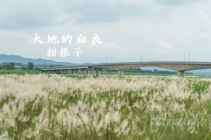 【台南景點】大地的白衣:甜根子草花海 讓人心動的九月雪 {大內橋下}{甜根子草}{九月雪}