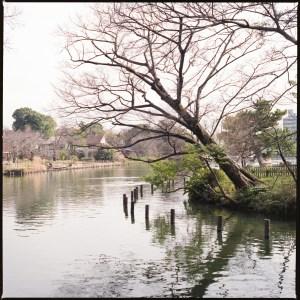 中原街道のオアシス洗足池