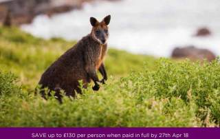 Pearl King Travel - Cultural, Wildlife & Wine Experience - Offer-Apr-18