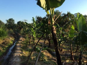 Agro Tourism Farm in Uganda