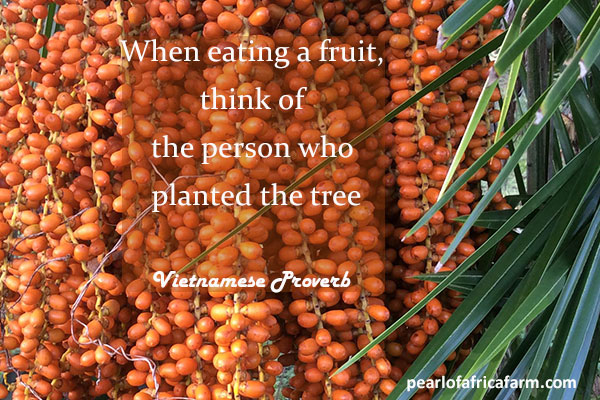 when-eating-a-fruit,-think-of-the-person-who-planted-the-tree - Vietnamese Proverb