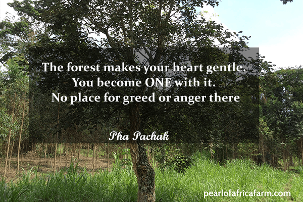 The-forest-makes-your-heart-gentle
