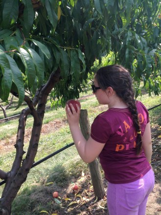 Apple picking at Belkin Family Look Out Farm.