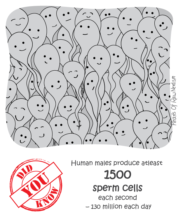 Did You Know - Sperm Production
