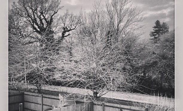 Frozen Trees #frost #winter #arborfield #willowfilter