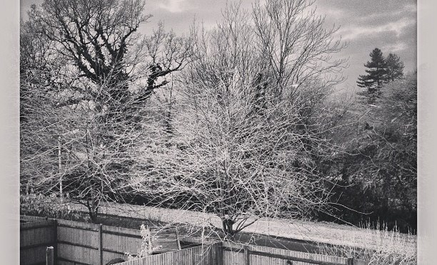 Frozen Trees #frost #winter #arborfield #willowfilter