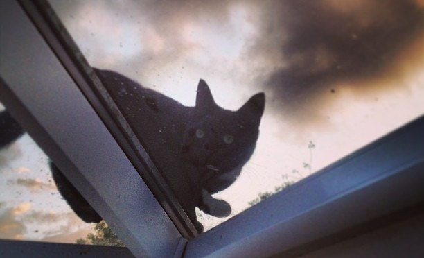 I thought that sounded like a heavy pigeon… #cat #roof