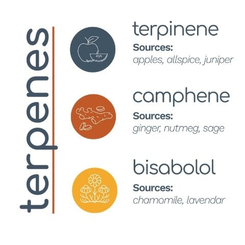 terpenes-a-terpinene-bisabolol-camphene