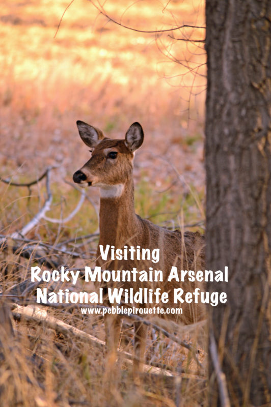 Rocky Mountain Arsenal National Wildlife Refuge