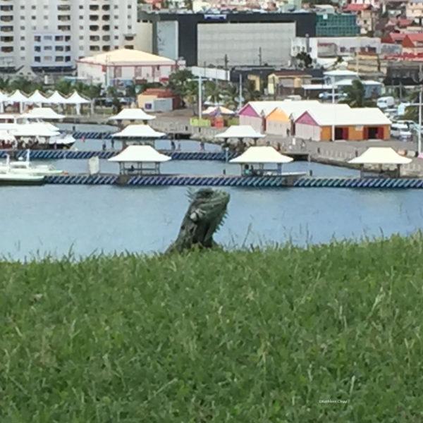 Iguana Fort de France Martinique