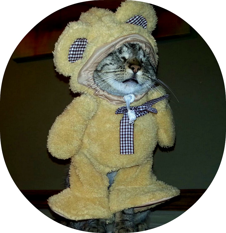 pebbles blind cat in a bear costume