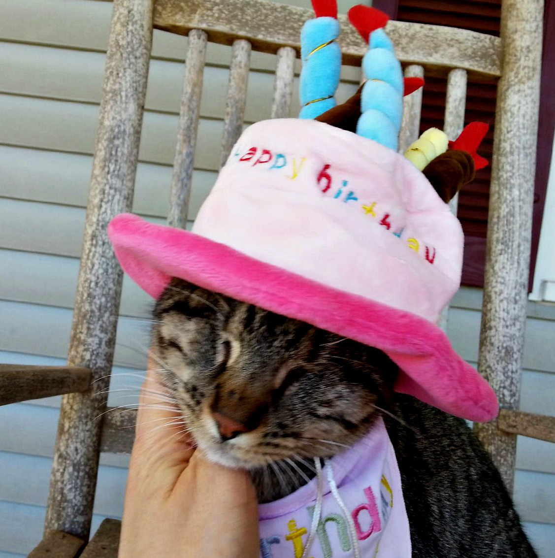 Pebbles the Blind Cat Birthday Hat