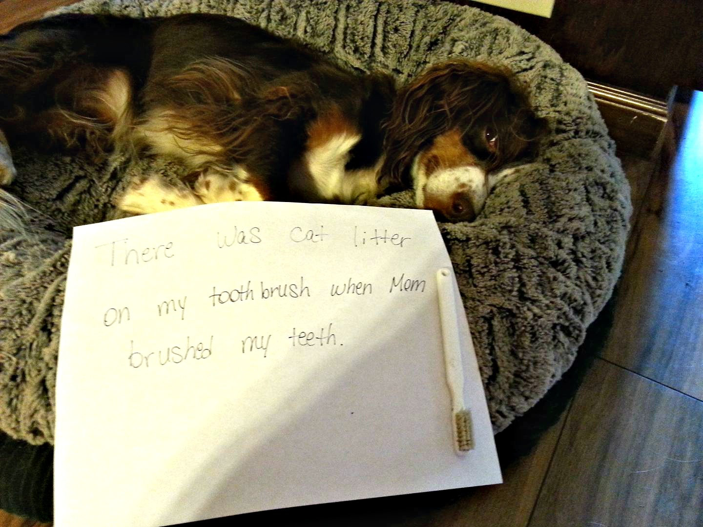 Pebbles the Blind Cat's sister Penny dog shaming