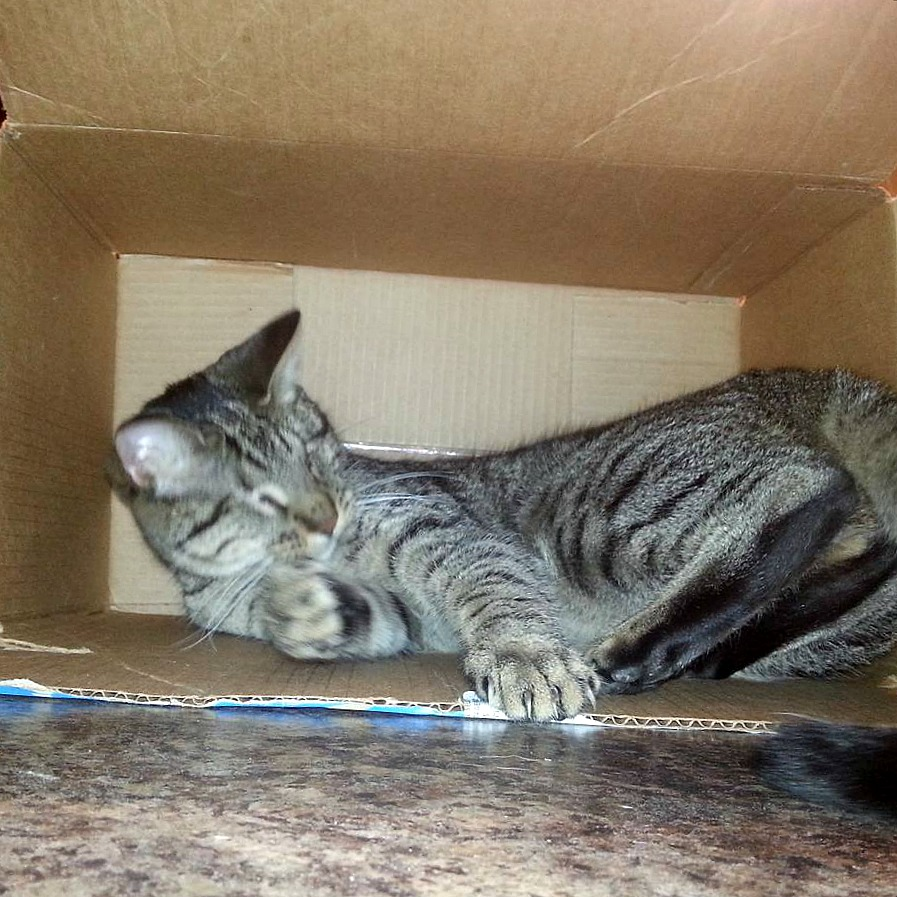 Pebbles the Blind Cat Box Pawty