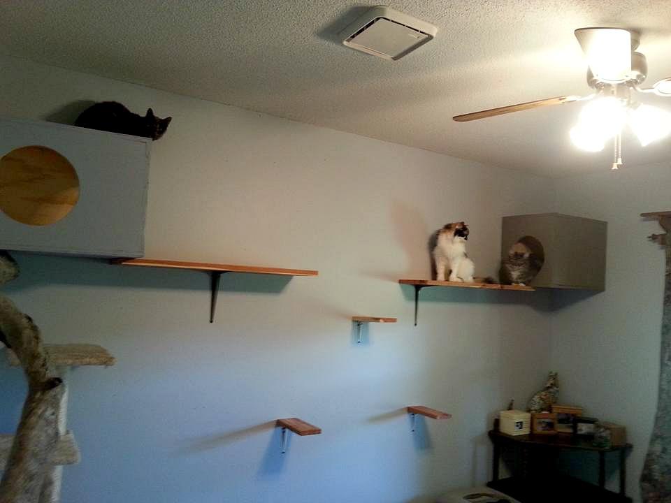Pebbles the Blind Cat's Cat Room