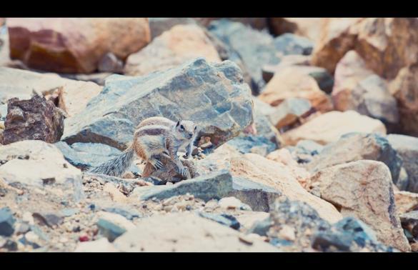 Tag 3 – Fuerteventura
