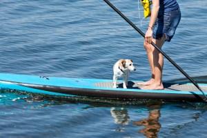 Paddle Baorder