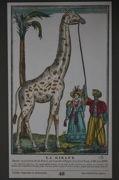 Anonyme, la girafe, xylographie, vers 1827, ed. Castiaux, Marseille, MUCEM
