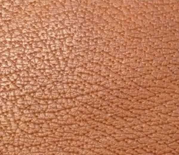 gruppo di pori in pelle di pecari