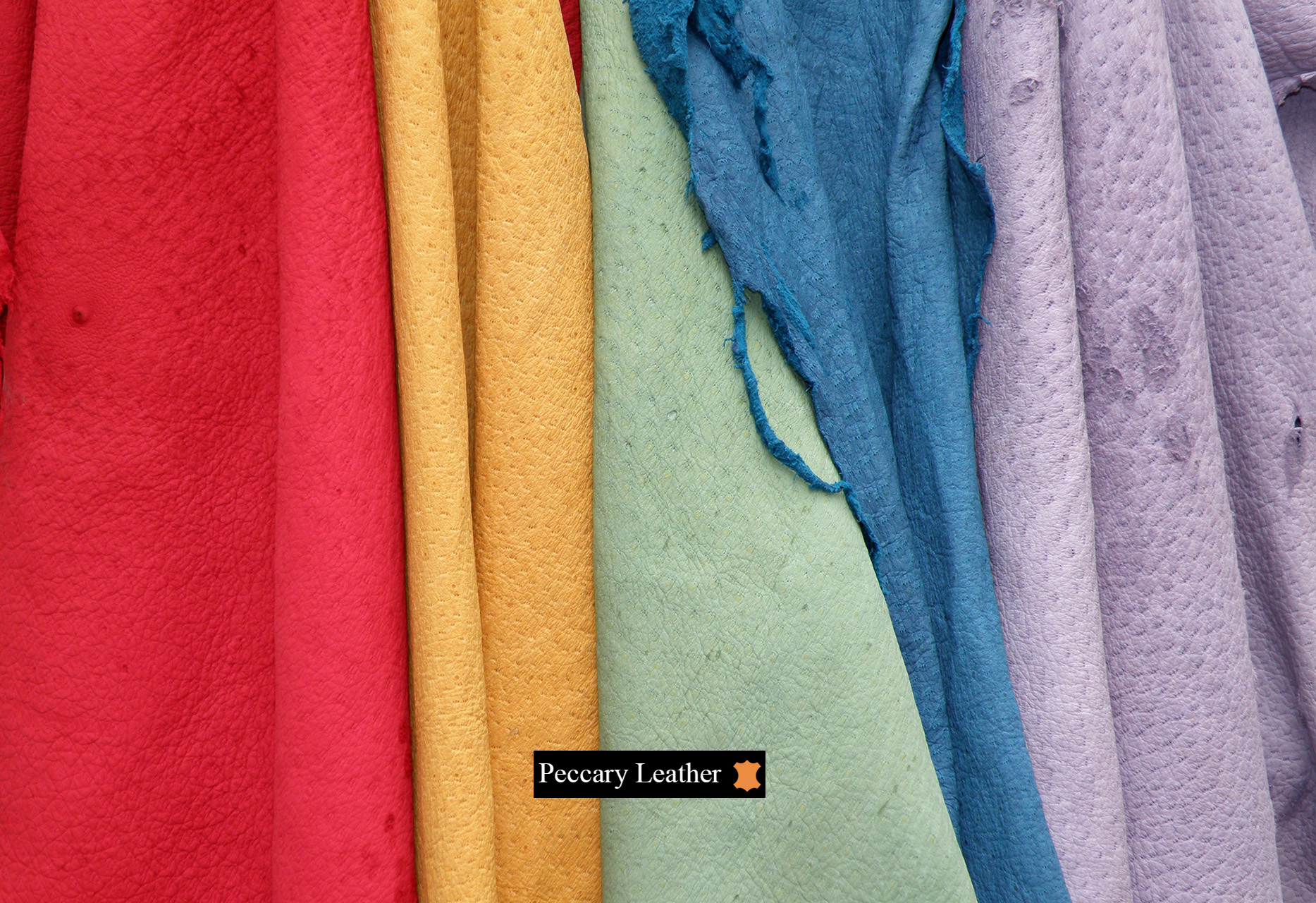 Cuero de Peccary en Color