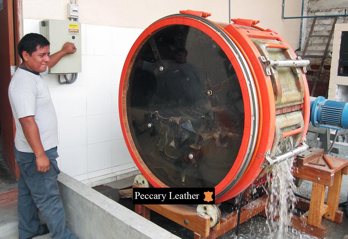 Peles de Pecari Imersão em Produtos Químicos No Tambor
