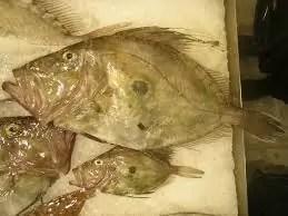 pez gallo mercado