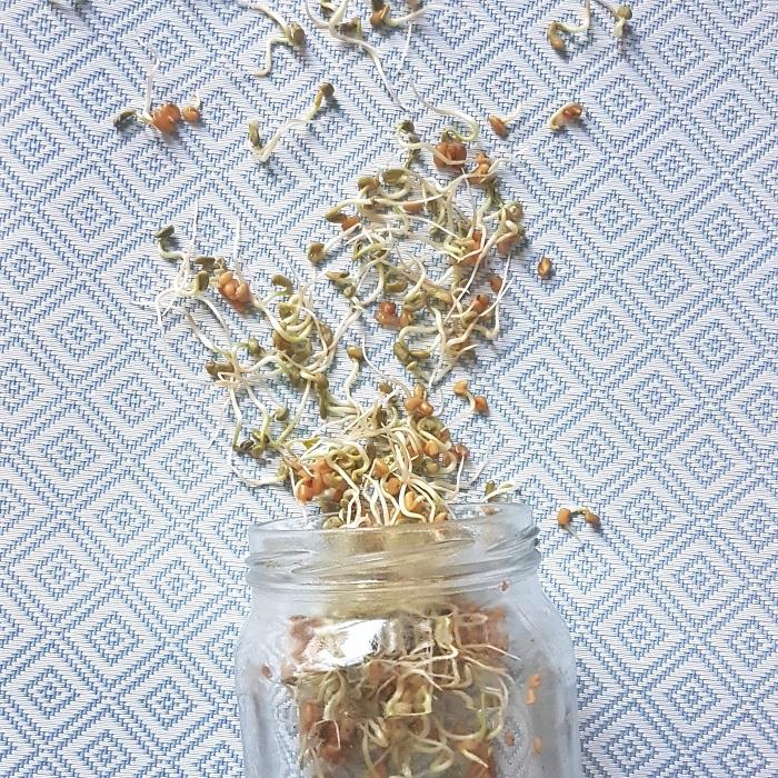 Découvrir les graines germées, petites mais époustouflantes ! Pêche & Eglantine