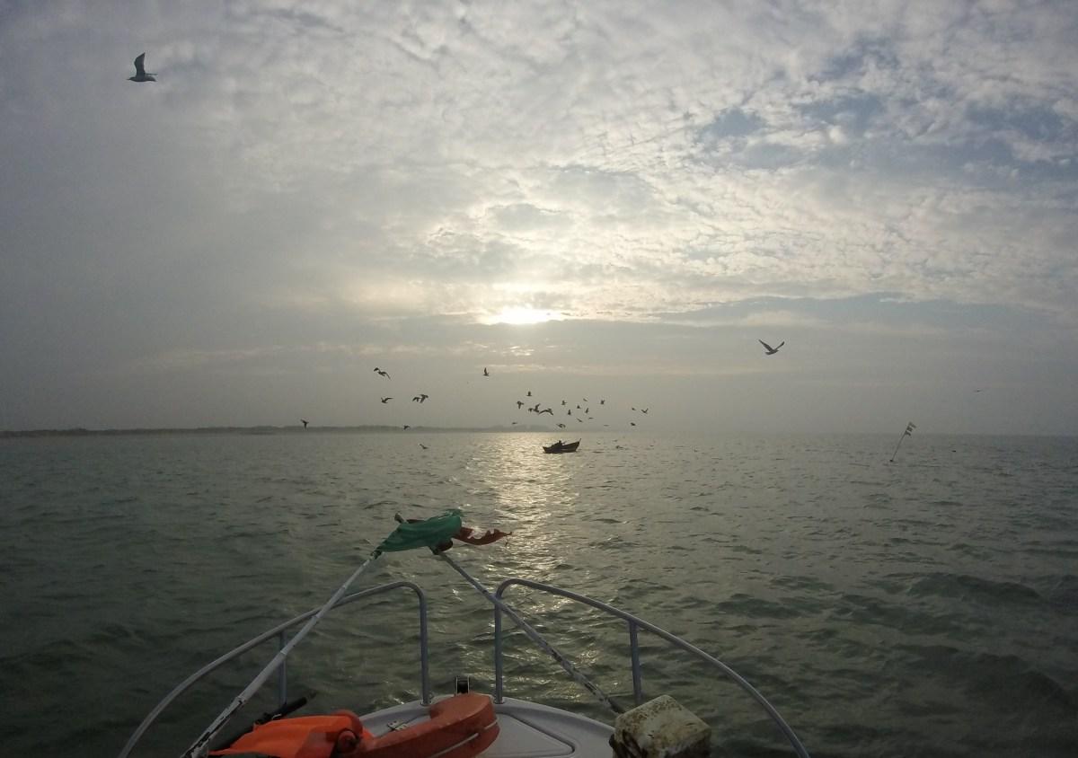 Nuée de goélands au lever du soleil