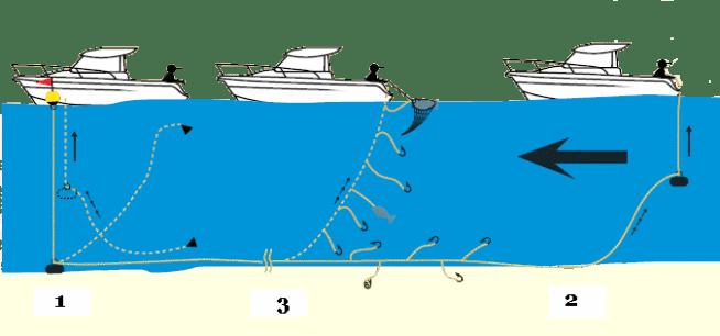 Schéma Relevage ou récupération d'une palangre