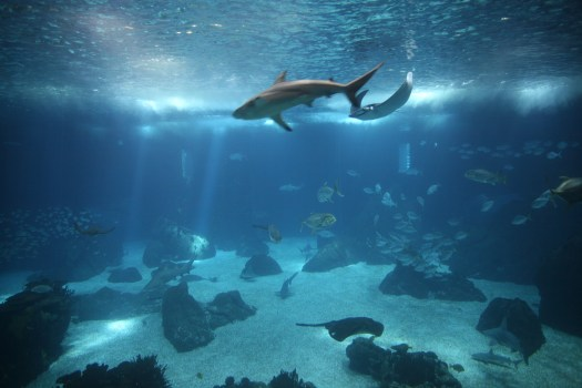 It is a wonderful facility and does a great job of showcasing the underwater world.
