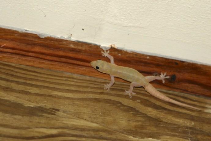 Wildlife on the deck at Bella Vista