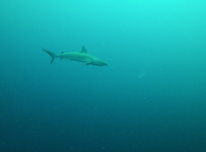 A few Reef Sharks came by as we were ascending out of the Blue Hole. Just checking us out.