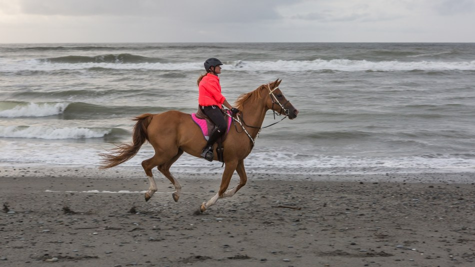 Local on the Beach in Greymouth