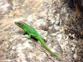 Fauna de la Quebrada Las Delicias